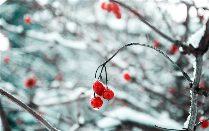 depth of field photography of red cherry fruits MacBook Air wallpaper