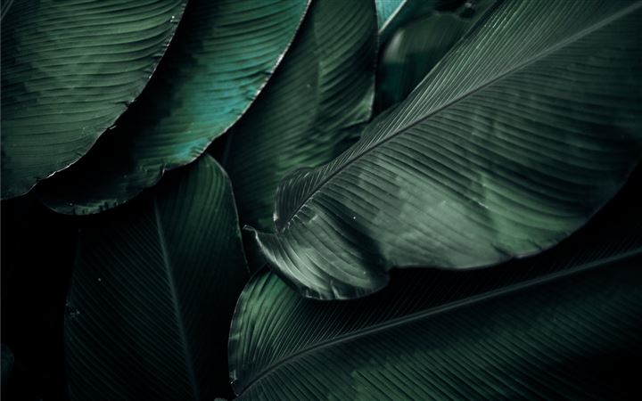 green leaves macro photography All Mac wallpaper
