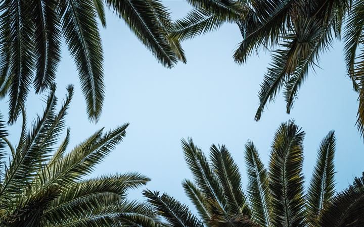 green palm tree under white sky MacBook Air wallpaper