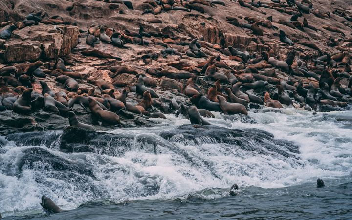 group of sea lions on shore All Mac wallpaper