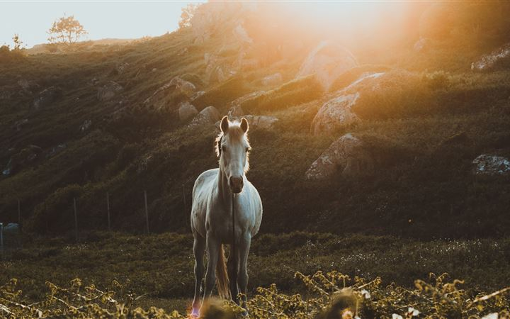photo of galloping horse ... All Mac wallpaper