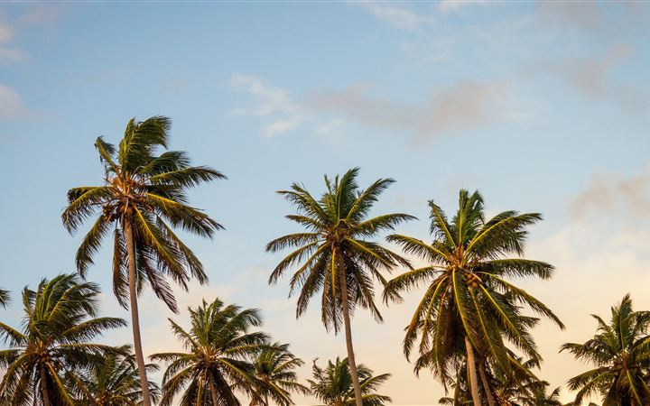 summer palm tree paradise All Mac wallpaper