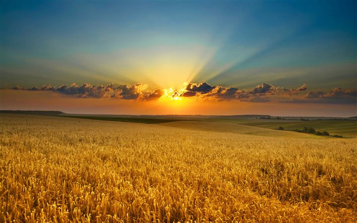 Golden summer field MacBook Pro wallpaper