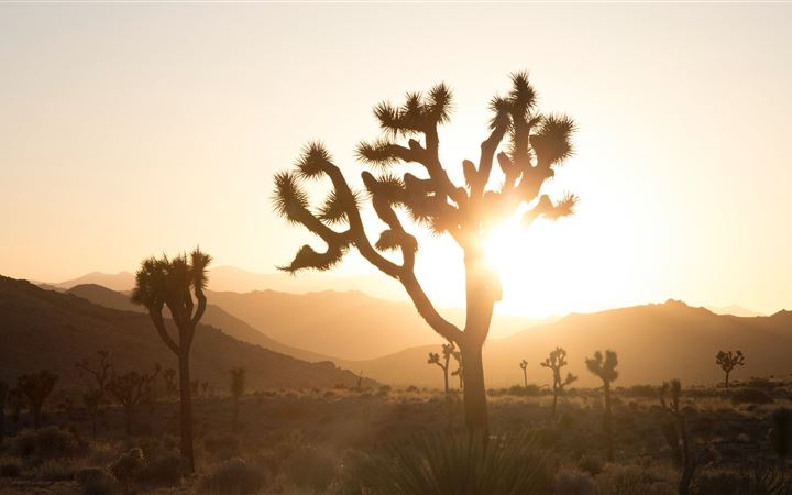plant in desert with sun glaring behind MacBook Pro wallpaper
