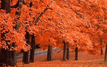 Beautiful Autumn Leafage Mac wallpaper