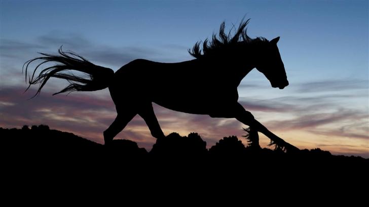 Horse In The Light Mac Wallpaper