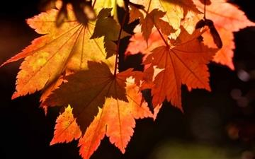Autumn Leaves All Mac wallpaper