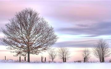 Trees And Fence Winter Mac wallpaper