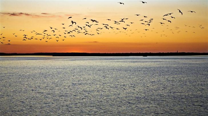 Birds In Flight Sunset Mac Wallpaper