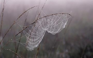 Cobweb Dew Fog Mac wallpaper
