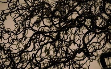 Hazelnut Tree Branches Mac wallpaper