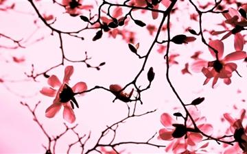 Magnolia Twigs Mac wallpaper
