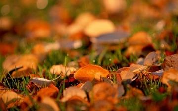 Autumn leaves Mac wallpaper