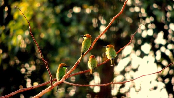 Goria Birds Mac Wallpaper