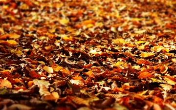 Fall Foliage  Mac wallpaper