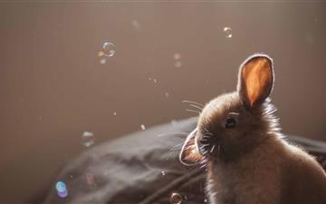 Cute Bunny Funny Face Mac wallpaper