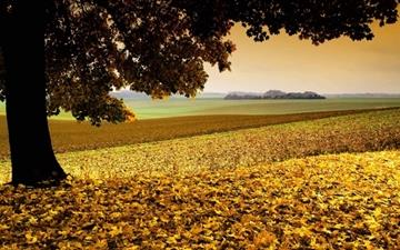 Field Covered In Yellow Leaves All Mac wallpaper