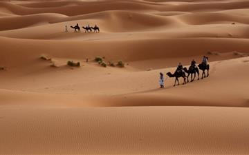 Camels Tour Mac wallpaper