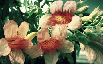 Natural Flower Mac wallpaper