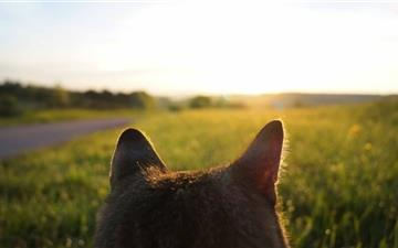 Cat Looking At Sunrise All Mac wallpaper