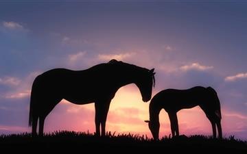 Horses Sunset Silhouette Mac wallpaper