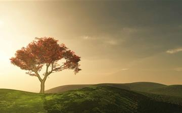 Alone Tree Mac wallpaper