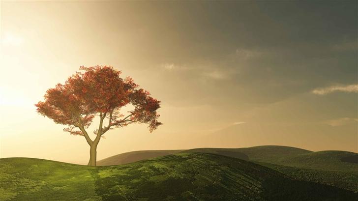 Alone Tree Mac Wallpaper