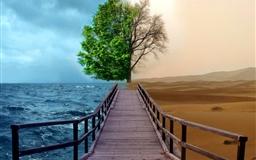 Half Life Tree
