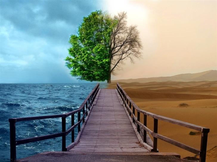 Half Life Tree Mac Wallpaper