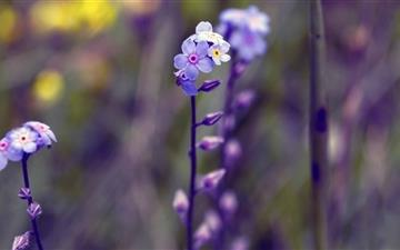 Blue Small Flowers  Mac wallpaper