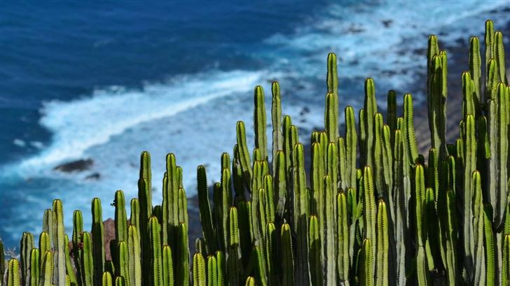 Desert Cactus Mac Wallpaper