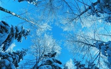 Tree Tops And Blue Sky Mac wallpaper