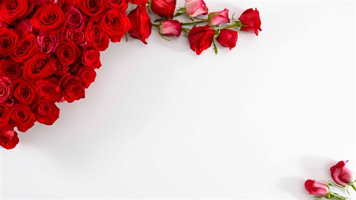 Red Roses On White Background Mac Wallpaper