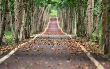 Tree Lined Road Mac wallpaper