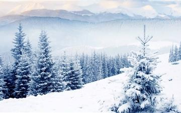 Snow On Fir Trees MacBook Pro wallpaper