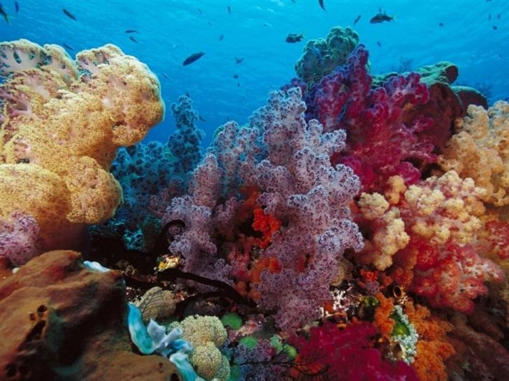 Color Coral Mac Wallpaper