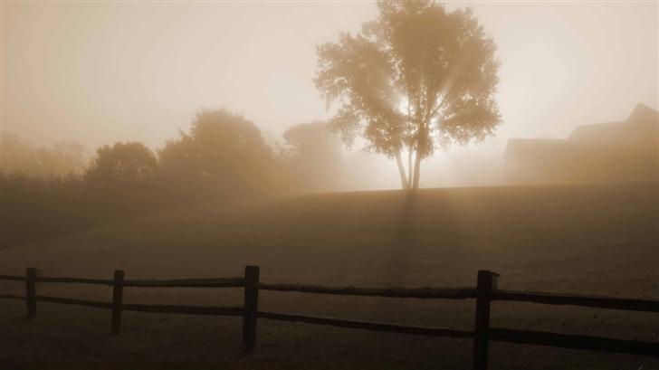 Foggy Morning Mac Wallpaper