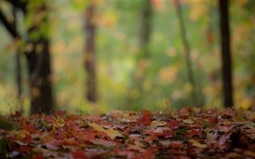 The Foliage Mac wallpaper