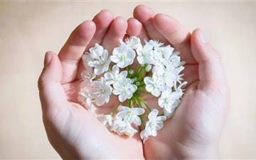 Hands Holding Flowers  Mac wallpaper