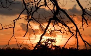 Sunset Wolfheze Mac wallpaper