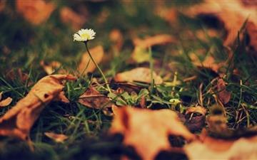 Lonely Flower Mac wallpaper