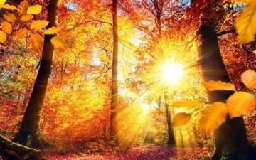 Autumn In German Mac wallpaper