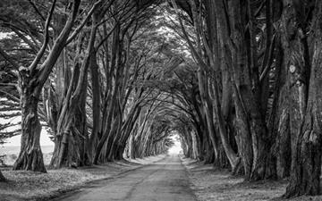 Country Road Aligned Trees Mac wallpaper