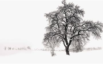 Winter Tree Mac wallpaper