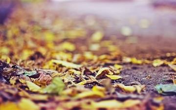Yellow Leaves On The Ground Mac wallpaper