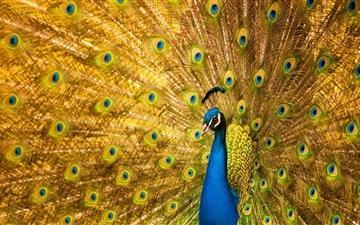 Most Beautiful Birds  Mac wallpaper