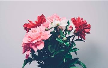 Peonies Bouquet Mac wallpaper
