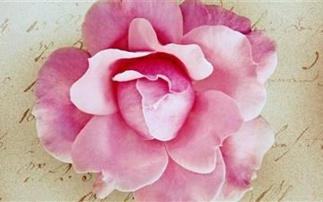 Pink Rose Vintage Mac wallpaper