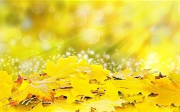 Yellow Leaves Fall Mac wallpaper