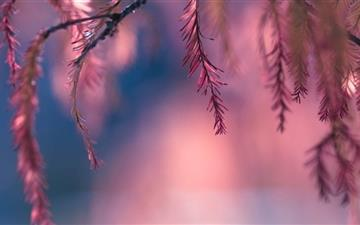 Pink Conifer Tree Branch All Mac wallpaper